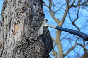 axe inside of tree