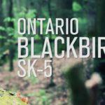 photo of an ontario blackbird sk 5