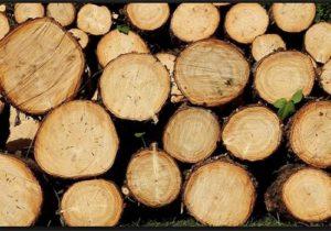 hardwood - start a fire