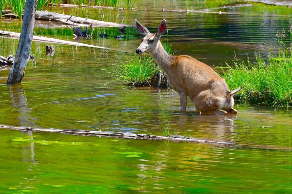 """NOT ALL """"WILDERNESS"""" WATER IS PERFECTLY CLEAN!"""